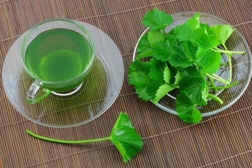 prezzemolo in foglie e acqua di prezzemolo