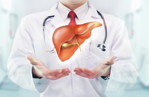 medico e disegno del fegato