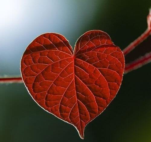 La depressione e i problemi cardiovascolari - foglia a forma di cuore