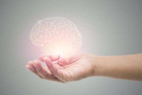Benefici della cannella sul cervello