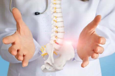 Medico e colonna vertebrale.