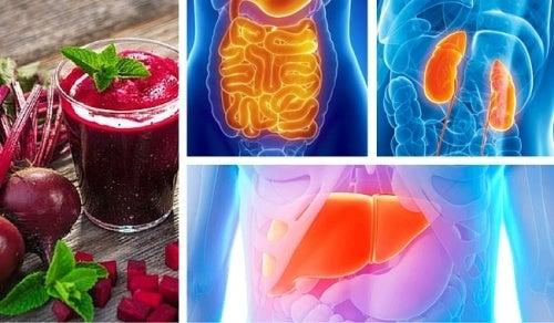 Come disintossicare gli organi vitali
