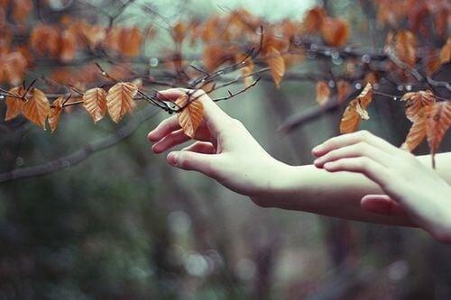 Mani che toccano foglie persone migliori