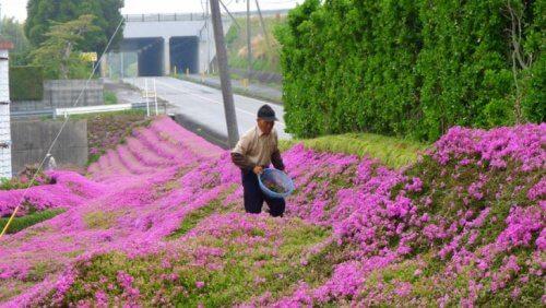 Signor Kuroki coltiva fiori