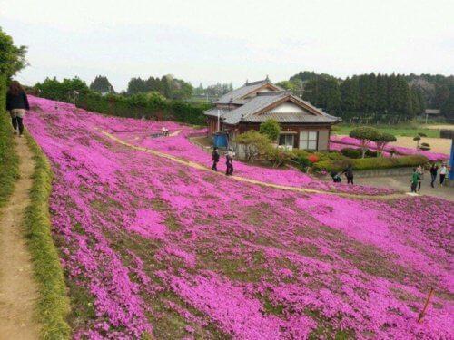 giardino pieno di fiori dei signori Kuroki