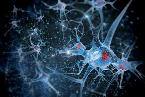 neuroni salute cerebrale