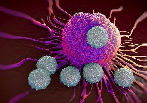 cellula cancerosa il cavolfiore