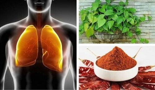 Depurare polmoni e bronchi: utili consigli