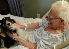 anziano in ospedale con il suo cane