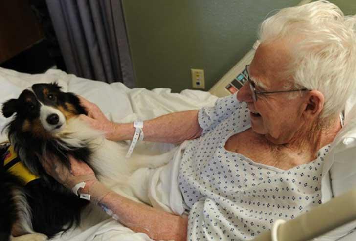 L'ospedale in cui gli animali possono visitare i loro padroni