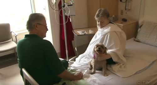 cane in ospedale con i suoi padroni