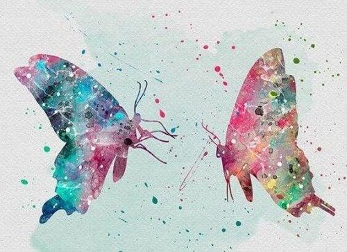 due farfalle senza rimorsi