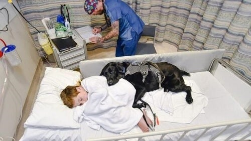 Mahe: il cane che si prende cura del suo padroncino affetto da autismo