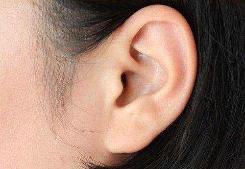 orecchio aceto