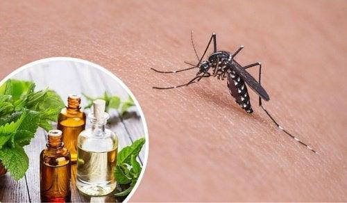 Zanzare: 11 erbe e spezie per allontanarle