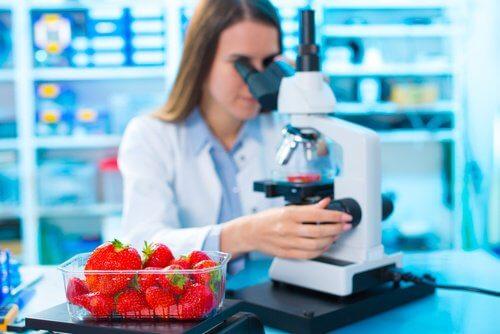 ricercatrice osserva fragole al microscopio