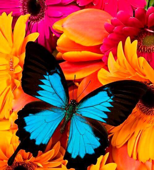 Farfalla colori