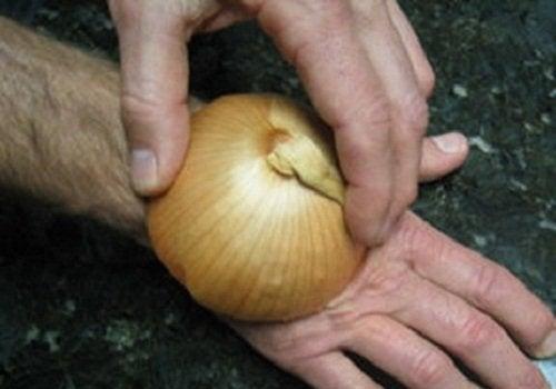Repellente la cipolla