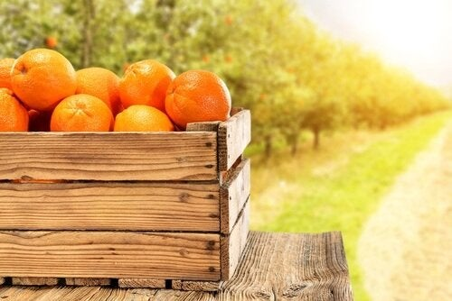 cassetta d'arance agrumi
