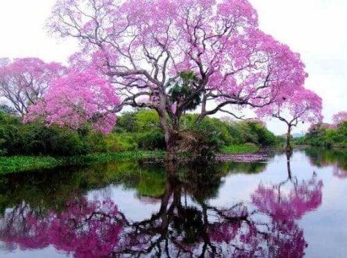 albero in fiore stress