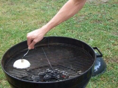 la cipolla griglia