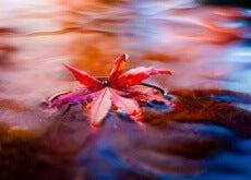 foglia sull'acqua stress