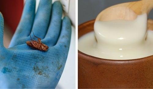 Come eliminare gli scarafaggi da casa in modo semplice