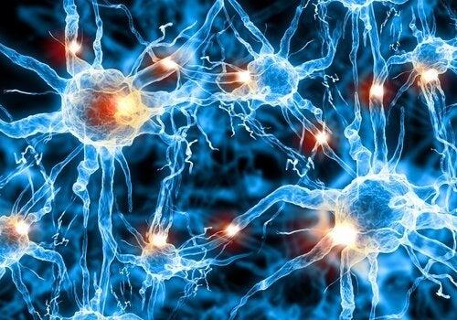 La brain gym aiuta a mantenere in forma il cervello