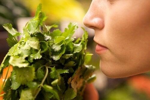Odore alimenti