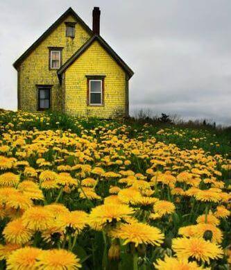 casetta e prato con fiori gialli