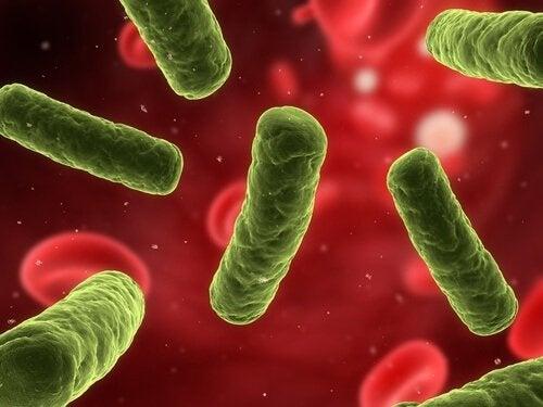 il sale marino rafforza il sistema immunitario