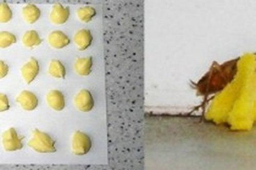 Veleno acido borico e uovo scarafaggi