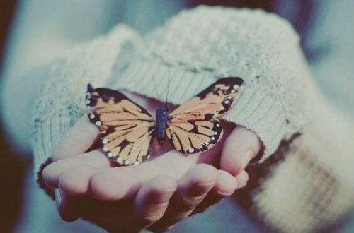 farfalla su mani