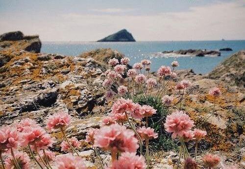 paesaggio di mare con fiori fare del bene