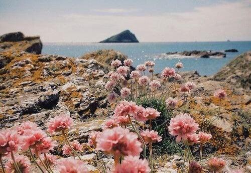 paesaggio-marino-con-fiori