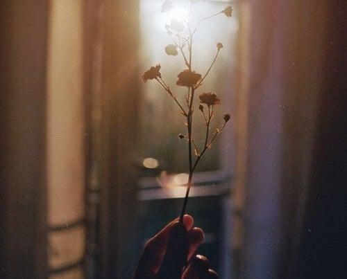 pianta germoglia nella mano priorità