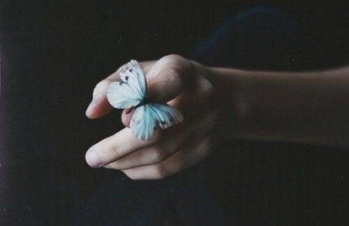 farfalla distacco