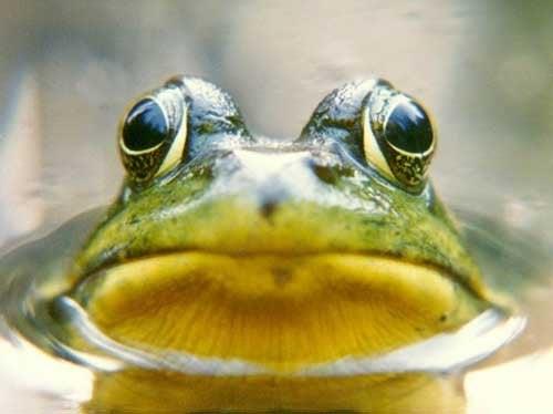 Il principio della rana cotta: di cosa si tratta?
