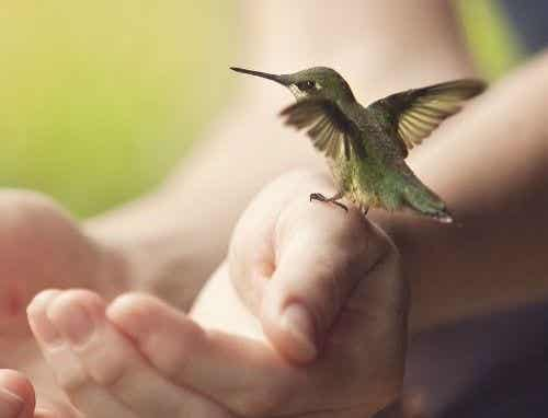 Distacco emotivo: niente deve possedervi