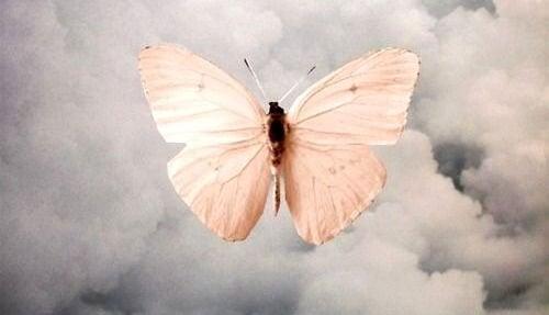 farfalla lutto
