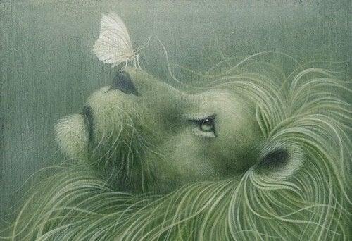 leone-con-farfalla-sul-naso