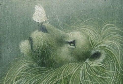 leone con farfalla sul naso