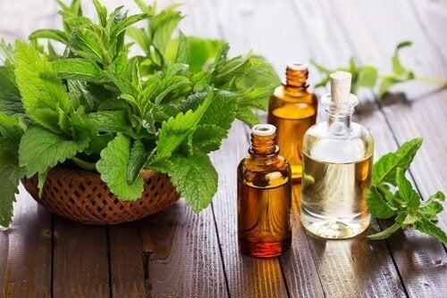 olio essenziale di menta per decongestionare le vie respiratorie