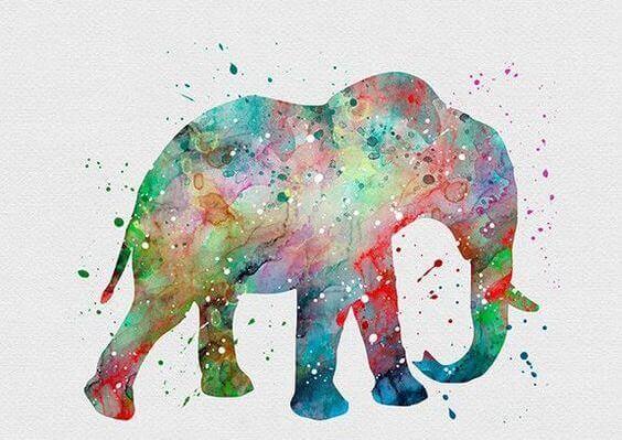 rabbia-in-elefante-colorato