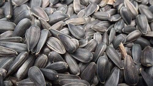semi di girasole frutta secca