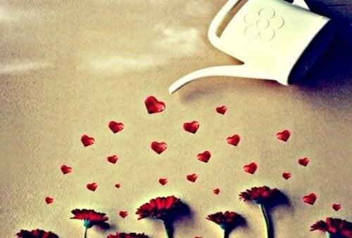 annaffiare un amore