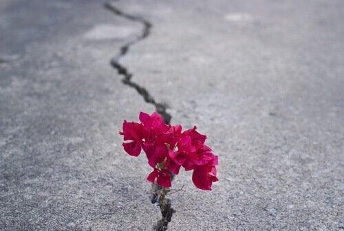 fiore-sullasfalto