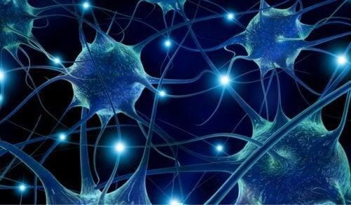 7 alimenti che migliorano la connettività dei neuroni