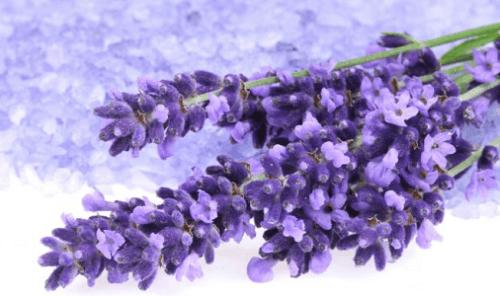 fiori-di-lavanda