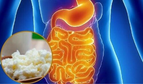 Come ripristinare la flora intestinale in modo naturale